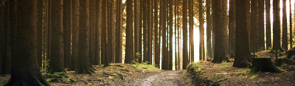 salud-consciente-ciclo-arbol-terapias
